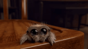 Cute, God, and Instagram: not-so-serious-wastebasket:  archiemcphee:  But then sometimes what you need most is a 20-second-long animated short about a very small, outrageously cute little spider named Lucas. Lucas the fuzzy wee spooder is the work of animator Joshua Slice. Slice had his young nephew, also named Lucas, provide the voice for his adorable arachnid creation: [via Klim Kozinevich via Laughing Squid]   Oh my god that was the best thing ever