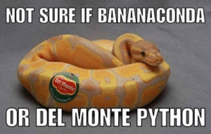 not sure if: NOT SURE IF BANANACOND  OR DEL MONTE PYTHON