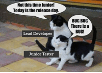 Time, Today, and Lead: Not this time Junior!  Today is the release day.  BUG BUG  There iSa  BUG!  Lead Developer  Junior Tester If there is a bug in the code and the manager didn't know about it, does it really exist?