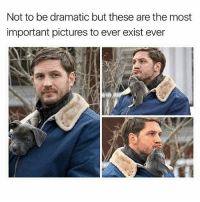Memes, 🤖, and Shame: Not to be dramatic but these are the most  important pictures to ever exist ever Please let these pics of Tom Hardy with a puppy in his coat assist you out of your hangover shame spiral today 😘