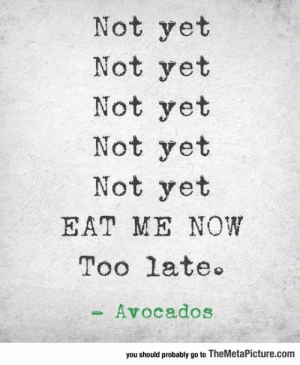lolzandtrollz:  How I Feel About Avocados: Not yet  Not yet  Not yet  Not yet  Not yet  EAT ME NOW  Too late  Avocados  you should probably go to TheMetaPicture.com lolzandtrollz:  How I Feel About Avocados