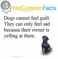 . ❕Double Tap ! 👉🏽 Tag someone who should see this! ❕Follow @snoop my other account! .: NotCommonFacts  @Not common facts  Dogs cannot feel guilt.  They can only feel sad  because their owner is  yelling at them  NotCommonMedia com . ❕Double Tap ! 👉🏽 Tag someone who should see this! ❕Follow @snoop my other account! .