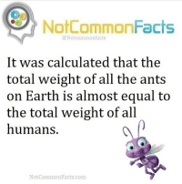 Calculation: NotCommonFacts  @Not common facts  It was calculated that the  total weight of all the ants  on Earth is almost equal to  the total weight of all  humans  Not Common Facts.com