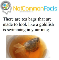 Goldfish, Memes, and Snoop: NotCommonFacts  @Not common facts  There are tea bags that are  made to look like a goldfish  is Swimming in your mug . ❕Double Tap ! 👉🏽 Tag someone! ❕Follow @snoop my other account! .