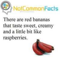 """I Bet, Memes, and Banana: NotCommonFacts  @Notcommon facts  There are red bananas  that taste sweet, creamy  and a little bit like  raspberries. 👌🏽 Comment """"Banana"""" letter by letter without getting interrupted. I bet you can't!"""