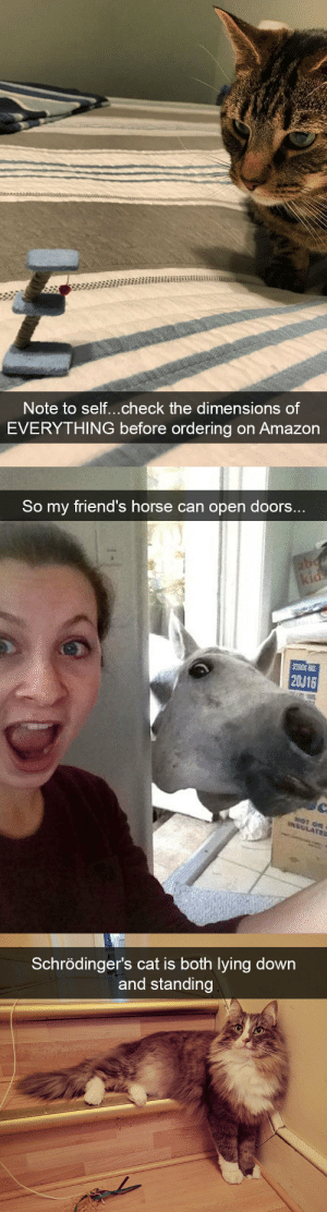 animalsnaps:Animal snaps: Note to self...check the dimensions of  EVERYTHING before ordering on Amazon   So my friend's horse can open doors..  20U16   Schrödinger's cat is both lying down  and standing animalsnaps:Animal snaps