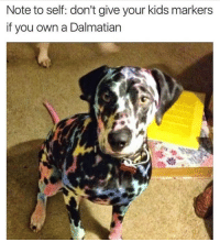 <p>Lisa Frank, Is That You?</p>: Note to self: don't give your kids markers  if you own a Dalmatian <p>Lisa Frank, Is That You?</p>