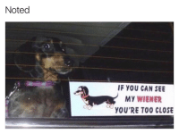 Funny, Extras, and Extra: Noted  IF YOU CAN SEE  My WIENER  YOU'RE TOO CLOSE Bumper sticker game extra 💪🏻💪🏻💪🏻