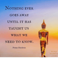 Blessed, Love, and Memes: NOTHING EVER  GOES AWAY  UNTIL IT HAS  TAUGHT US  WHAT WE  NEED TO KNOW.  Pema Chodron  tiny  b u d d h a If there was no healing power within us, nothing could be healed. Learn what you need to learn to let go 🙏🏼❤️ letitgo namaste love winning peace peaceful positivevibes positive lovinglife power blessed badassery