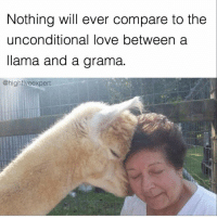 @highfiveexpert makes the funniest memes. One of my favs, go follow. @highfiveexpert @highfiveexpert @highfiveexpert: Nothing will ever compare to the  unconditional love between a  llama and a grama.  @high five expert @highfiveexpert makes the funniest memes. One of my favs, go follow. @highfiveexpert @highfiveexpert @highfiveexpert