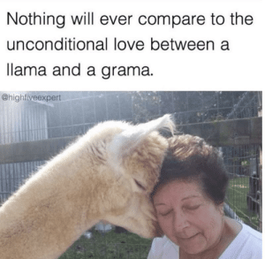 I need someone in my life to give me head boops like that: Nothing will ever compare to the  unconditional love between a  lama and a grama  @highfiveexpert I need someone in my life to give me head boops like that
