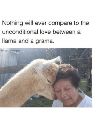 Llama and grama: Nothing will ever compare to the  unconditional love between a  llama and a grama.  @highfiveexpert Llama and grama
