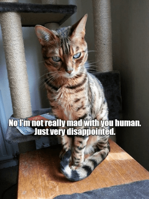 Disappointed, Mad, and Human: NOTim not really mad with you human.  Just very disappointed.
