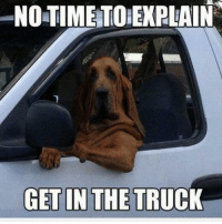 Memes, 🤖, and List Ofs: NOTIME TO EXPLAIN  GET IN THE TRUCK Click the link in my profile to get a helpful list of foods to never feed your doggies.!!