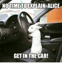Cars, Memes, and 🤖: NOTIME TOE PLAIN, ALICE  GET IN THE CAR! ~Eddie~