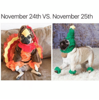 Christmas, Life, and Girl Memes: November 24th VS. November 25th Don't trust anyone who says it's too early for Christmas- you don't need that negativity in your life @itsdougthepug