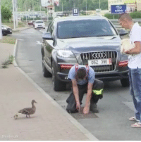 Memes, Heart, and Mothers: Noviny.sk  052 39E This mother's ducklings fell into a sewer grate. What happens next will warm your heart. ❤🦆❤