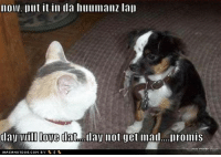 Now put it in da humanz lap, day will love dat, day not get mad, promis..............   #cat #dog #mouse: now, Dllt it in da hulllmanz lal)  layMII Dove dat day not get mad. Iromis Now put it in da humanz lap, day will love dat, day not get mad, promis..............   #cat #dog #mouse