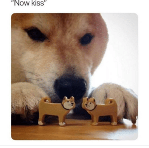 """Dog Memes Of The Day 32 Pics – Ep52 #animalmemes #dogmemes #memes #dogs - Lovely Animals World: """"Now kiss"""" Dog Memes Of The Day 32 Pics – Ep52 #animalmemes #dogmemes #memes #dogs - Lovely Animals World"""