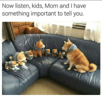 Cute, Funny, and Memes: Now listen, kids, Mom and I have  something important to tell you. 42 Cute Animal Memes That Never Stop Being Funny