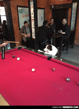 This guy was at the pub watching every shot on the pool table. Repositioning himself after every shotomg-humor.tumblr.com: NOW OPE  FOR  Breakf  S15  LUNC  DRIN  -S20  DINNE  DRIN  CHECK OUT MEMEPIX.COM  MEMEPIX.COM This guy was at the pub watching every shot on the pool table. Repositioning himself after every shotomg-humor.tumblr.com
