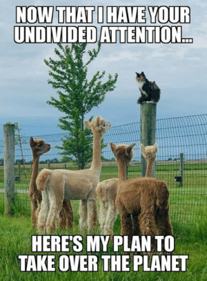 Starting an alpaca-lypse: NOW THAT I HAVE YOUR  UNDIVIDED ATTENTION...  HERE'S MY PLAN TO  TAKE OVER THE PLANET Starting an alpaca-lypse