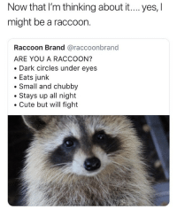 Cute, Memes, and Raccoon: Now that I'm thinking about it.... yes, l  might be a raccoon.  Raccoon Brand @raccoonbrand  ARE YOU A RACCOON?  . Dark circles under eyes  . Eats junk  . Small and chubby  . Stays up all night  Cute but will fight 🤔😂