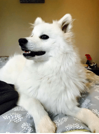now that is a good looking shoobie: now that is a good looking shoobie