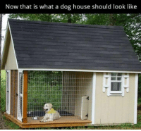 What A Dog: Now that is what a dog house should look like