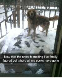 "Dank, Monster, and Snow: Now that the snow is melting l've finally  figured out where all my socks have gone ""It wasn't me, it was the snow monster."""