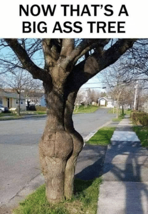 Big Ass: NOW THAT'S A  BIG ASS TREE