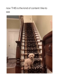 Cute, Girl Memes, and Content: now THIS is the kind of content I like to  see so damn cute