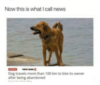 Anaconda, Dank, and News: Now this is what I call news  Dog travels more than 100 km to bite its owner  after being abandoned