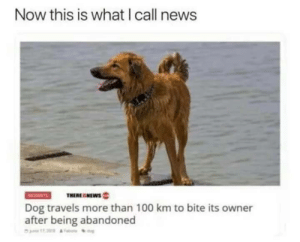 Now this is good news!: Now this is what I call news  THERESNEWs  Dog travels more than 100 km to bite its owner  after being abandoned Now this is good news!