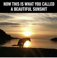 """9gag, Beautiful, and Cute: NOW THIS IS WHAT YOU CALLED  A BEAUTIFUL SUNSHIT """"Sunshite!"""" a Scot would say.  More good boys on ➡️ https://9gag.com/gag/aAdWxZo/sc/cute?ref=fbsc"""