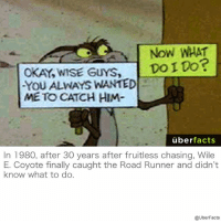 https://www.instagram.com/uberfacts/: Now WHAT  Do ito?  OKAY, WISE GUYS  YOU ALWAYS WANTED  ME TO CATCH HIM  uber  facts  In 1980, after 30 years after fruitless chasing, Wile  E. Coyote finally caught the Road Runner and didn't  know what to do.  @UberFacts https://www.instagram.com/uberfacts/