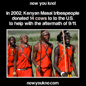 "9/11, Africa, and Being Alone: now you kno!  In 2002, Kenyan Masai tribespeople  donated 14 cows to to the U.S  to help with the aftermath of 9/11.  nowyoukno.com thestoicgod:  hutchj:  thestoicgod:  velocicrafter: markingatlightspeed:  cyanwrites:  iammyfather:  evilelitest2:  petitepenquin:  mehofkirkwall:  disputedthreshermaw:  natrsrants:  deadcatwithaflamethrower:  jadedhavok:  randomthingsthatilike123:  gweatherwax:  awesomonster:  obese-starving-artist:  the-treble:  nowyoukno:  Source for more facts on your dash follow NowYouKno  That was super nice of them. And now I'm mad that nobody told us we were given cows. Cause that's really f*cking nice and nobody mentioned it at all.  American media tends to disregard that anyone donates to the US. And then Amurricans complain about money going abroad because ""nobody helped the US in our disasters."" . Also, do you know how much a cow costs? O.O  It isn't just a matter of how much a cow costs, its a matter of considering that Masai life is based around their cattle. Its their wealth, their food, and a significant part of their religion. Here's a quote from Wikipedia: ""Traditional Maasai lifestyle centres around their cattle which constitute their primary source of food. The measure of a man's wealth is in terms of cattle and children. A herd of 50 cattle is respectable, and the more children the better. A man who has plenty of one but not the other is considered to be poor.[37] A Maasai religious belief relates that God gave them all the cattle on earth, leading to the belief that rustling cattle from other tribes is a matter of taking back what is rightfully theirs, a practice that has become much less common.[38]"" So its not just ""they gave us 14 cows"", its that they gave us something that is very important and significant to them, it is more than just a kind gesture that definitely deserves to be known and its a genuine shame that more people don't know about it.  Wait, you guys DON'T KNOW that we offer help to the US when you have disasters??????? Shit, down here in Brazil we not only offered to send tracking units and doctors to help in 9/11 but we wanted to send a whole lot of donations to help with Katrina (we have experience with floods down here so we knew what kind of medicine to send to prevent outbreaks).  We alone had like 2 army airplanes full of medicine and non-perishables like baby formula, diapers, bottled water, mosquito nets and other stuff that's needed to fight opportunistic diseases that hit flooded areas, enough to assist a good few thousand people at least, ready to go the day after it hit, but your government refused the donations.  The same thing happened to the Canadians and Europeans who offered help, the US embassies around the world told us all to give money to Red Cross. And so we did, we all gave hundreds of millions of dollars to them, and then this happened: Red Cross scandals tarnish relief efforts   'Breathtaking' Waste and Fraud in Hurricane Aid   So please, don't you go spreading misinformation and prejudice against the rest of the world, WE DID OFFER HELP AND ORGANIZED IT EVEN FASTER THAN BUSH DID, BUT Y'ALL REFUSED IT.   Oh wow I had no idea this happened it's really not talked about in media at all wow this is something good to know about wow  I'm so angry. I didn't know that other countries tried to help after 9/11 or Katrina.  Like, that's something we, the people, should hear about and we don't. Please don't blame us for the shitty decisions our government makes.  We don't have as much control over our government as we would like to think and they keep a lot from us.  Spread this shit.    After Katrina, Cuba donated several hundred blankets. Think about that. A country that is suffering economically due directly to the US embargo offered to help us when we needed it by sending what they could. And once again, it was refused. We have a government that is so self-righteous that we refuse to accept disaster aid in order to maintain this facade that we are the most generous nation on earth.  Okay, Katrina thing.Only Texans really knows this? and even then it's not wide spread.Mexico sent their army.They sent their army for relief efforts. Didn't call ahead, they drove all the way to San Antonio with doctors and food and all sorts of supplies.When people actually got a call from them saying ""Hey, we're sending people up.""The people who answered said ""What? We can't…""""Too late, already there.""This was while the government was turning down help.So yeah, other countries send relief.Forest fires up in Washington last year? Firefighters from Australia came up to assist.Like… we don't hear about this shit. At all.  I can second the above with the fires.  Most the time, when people say ""oh FEMA or something sent people right?"" re: fires, its actually people from other countries showing up and kinda ignoring the government telling them to fuck off and staying on behalf of local departments because we REALLY need them.  If there's a huge ass disaster, and the government is sitting there with a thumb up it's ass, help is offered and most the time– shit, it gets there!But then the feds do something really fucking dirty.They insist they were the help, if it's talked about at all.  They insist those people putting out fires were federal people, because to most people a fireman's a fireman. The people handing out water and food, a relief worker is a relief worker. So on and so forth.  We had people come up when the fires were so bad a while ago– not the Australians, but i think there was like a German group of like 3 guys that flew themselves over? They came out of sheer ""this is horrible and we're helping"" and my dad [local fire chief] had them working with our guys and the feds lost no time telling every news outlet that it was THEIR people doing all the fire knockdowns and structure work when these guys were running into buildings and grabbing people, pets, and people's important documents because they knew papers were a pain in the ass to replace.  What you gotta understand is that our government is very intent on selling us and the rest of the world [as much as possible] the idea of a powerful and self reliant country. All our reporting on disasters, starts with the scaremongering and then moves to ""but our people can handle it because we're the best at handling things"" and then they move on before the idea it's out of control comes to mind. The average person outside of the disaster has no idea, if they have never been around such an event or met someone who regularly deals with these things, they will kinda probably nod along with that. Because we have no real scope on the scale and impact– by design. Our media intake is very controlled to slant everything to the ""eh, we can handle it and everyone else out there– they need our help because they're not so good at handling disasters like we are.""People who know better, reading international news, interacting with international social groups, looking outside their sphere of community– we know better but that kinda slant is really hard to break from because of that grip American media has on information.So, taking that knowledge, we further have restricted reporting on certain disasters because they're considered unimportant. Hurricanes are considered important, earthquakes are only considered important if it wrecks something the government cares about or somewhere a couple million people live that they'll upset the national money flow/they can throw money at someone to make the news care, floods are only important if it's in a similar manner to earthquakes but since they occur annually they're rarely reported on nationally, mudslides that kill people or leave hundreds homeless aren't important to the government even through they happen constantly, wildfires that consume most of the nation/continent each year generally are unimportant until they consume a town or threaten a government interest/money flow location. Terrorist attacks are always important because people will talk about them. So, when we do get help for any of the above, it's possible that most people may have no idea about what's happened, let alone that help's been sent. Or if people know something happened, the details are vague– the news don't care to give the nitty gritty. You'll know something happened and people are suffering and ""gee, isn't it good you're not them"" and then now the weather. So, yeah, basically no one really knows we get help.  International response to Hurricane Katrina: https://en.wikipedia.org/wiki/International_response_to_Hurricane_Katrina  We got HELLA help, but nobody really talks about it  American Media really fails regularly   Hurricane Sandy, Quebec sends power line crews down to assist in restoring power.  California gets rid of water bombers due to budget cuts, Canada sends theirs down to help fight wild fires. Amazing what living on the border and having outside TV News does to your information flow.  After Katrina, Denmark offered to donate water purification units so people wouldn't get sick from drinking contaminated water, but the offer was declined. A private Danish company built a mobile satellite phone booth and drove it around the poor neighbourhoods in Mississippi and Louisiana so people could call their families and insurance companies for free (apparently there was a deadline for reporting damages but people couldn't call in because their mobile phones were dead and landlines were down).  American propaganda is not a thing of the past, nor is it a new thing.  It has been around forever, telling stories of exceptionalism and self-reliance while our government tries its hardest to refuse the help of others and offer its own to them, to try and force other nations onto their back foot and remain aggressively benevolent in international matters, so that it can lord that shit over them in negotiations and the media in general.I guarantee you America would have a less jingoistic, less xenophobic populace overall if this sort of information were actually reported to us.  If we weren't always fed the lie of helping the world without any gratitude or help in return.  If the media didn't present us as world police and instead as a part of the community, as other countries try hard to include us as, then maybe Americans would actually act like they're part of a fucking community.But global citizens are hard to monger fear and distrust and xenophobia and nationalism with.  They're hard to control with propaganda and hate.  They're hard to keep ignorant and docile and saying ""this is fine"" while the empire burns.A lot of Americans wonder why our country is seen as a worldwide bully.  Shit like that, my friends.  Shit like that.  Its hubris is seemingly limitless.  C O M M E N T A R Y FYI: They left out the part where America's rudeness kicked in and turned down the offer of the cows.    The US government is really tryna kill its people. Someone offered water purification units and they were like ""nah,"" let those tricks get sick.  @hutchj  how about the U.S. passed a law recently making CBD, the non-psychoactive derivative of cannabis, illegal as a Schedule A drug, EVEN THOUGH IT HAS BEEN PROVEN TO REDUCE EPILEPTIC SEIZURES IN CHILDREN TO ZERO among a dozen other ailments having been reduced to nominal levels allowing ppl to function normally (ADHD, chronic pain, IBS, menstrual cramps, Alzheimer's, etc). Doctors around the country (that Big Pharma can't buy off) are fighting back for their patients' well-being. 😡"