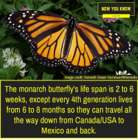Facts, Life, and Memes: NOW YOU KNOW  FACTS  Image credit: Kenneth Dwain Harrelson/Wikimedia  The monarch butterfly's life span is 2 to 6  weeks, except every 4th generation lives  from 6 to 8 months so they can travel all  the way down from Canada/USA to  Mexico and back.