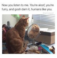 Memes, Best, and Stuff: Now you listen to me. You're aloof, you're  furry, and gosh darn it, humans like you.  @high fiveexpert @thedryginger gives the best pep talks. She also posts the funniest stuff on the gram. @thedryginger is a must follow!