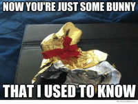 We all have a bit of chocolate from Easter left over.... How about you? Alberni Vet Clinic 250-723-7341: NOW YOURE JUST SOME BUNNY  BUN  THAT I USED TO KNOW  We Know Meme We all have a bit of chocolate from Easter left over.... How about you? Alberni Vet Clinic 250-723-7341