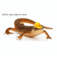 Nsfw, Work, and Safe: NSFW: Newt Safe For Work This will always be my favorite NSFW pic.