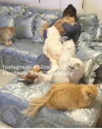 Cats, Facebook, and Instagram: nstagram-012ca,  ,dy  Facebook or  ats lady Time spent with cats is never wasted 💗🐱 mommyandfloofstime _______________________________________________ meow instacat instagram instavideo catvideo catsofinstagram instapet video kucing gato persian persiancat instadaily instamood catoftheday catlady