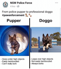 All growns up 🏆: NSW Police Force  4 hrs  From police pupper to professional doggo  #pawenforcement侃沓沓  Pupper  Doggo  Leaps over high objects  Goes under high objects  Easily bamboozled  Can't really bork  - Not easily bamboozled  Always borks All growns up 🏆