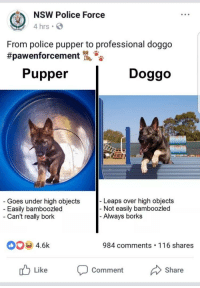 """<p>Doggo graduates police academy via /r/wholesomememes <a href=""""http://ift.tt/2FicBc4"""">http://ift.tt/2FicBc4</a></p>: NSW Police Force  4 hrs  From police pupper to professional doggo  #pawenforcement  Pupper  Doggo  Goes under high objects  Easily bamboozled  Can't really bork  Leaps over high objects  Not easily bamboozled  Always borks  4.6k  984 comments 116 shares  Like Comment Share <p>Doggo graduates police academy via /r/wholesomememes <a href=""""http://ift.tt/2FicBc4"""">http://ift.tt/2FicBc4</a></p>"""