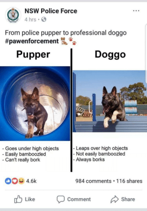 bazwillendinflames:  positive-memes:  Doggo graduates police academy  @gleek-runner : NSW Police Force  4 hrs  From police pupper to professional doggo  #pawenforcement  Pupper  Doggo  Goes under high objects  Easily bamboozled  Can't really bork  Leaps over high objects  Not easily bamboozled  Always borks  4.6k  984 comments 116 shares  Like Comment Share bazwillendinflames:  positive-memes:  Doggo graduates police academy  @gleek-runner