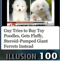 wow - Nick: NUEVA MODALIDAD DE ESTAFA  Guy Tries to Buy Toy  Poodles, Gets Fluffy,  Steroid-Pumped Giant  Ferrets Instead  ILLUSION 100 wow - Nick