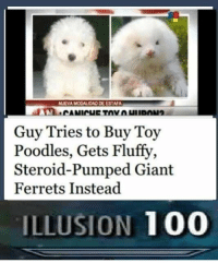 "<p>Skyrim memes are on the rise. BUY BUY BUY! via /r/MemeEconomy <a href=""http://ift.tt/2tUOR9Q"">http://ift.tt/2tUOR9Q</a></p>: NUEVA MODALIDAD DE ESTAFA  Guy Tries to Buy Toy  Poodles, Gets Fluffy,  Steroid-Pumped Giant  Ferrets Instead  ILLUSION 100 <p>Skyrim memes are on the rise. BUY BUY BUY! via /r/MemeEconomy <a href=""http://ift.tt/2tUOR9Q"">http://ift.tt/2tUOR9Q</a></p>"