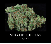 Memes, Ak-47, and 🤖: NUG OF THE DAY  AK 47
