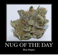 Memes, Blue, and Blues: NUG OF THE DAY  Blue Magoo