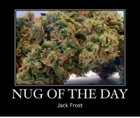 Memes, Jack Frost, and 🤖: NUG OF THE DAY  Jack Frost